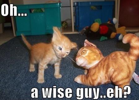 I'll F you up m8. . funny cat simba jews illuminati Bieber yolo