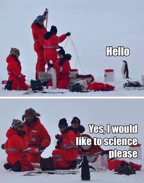I love penguins. .. so cute I love penguins so cute
