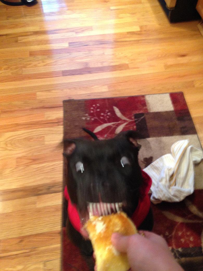I think my dog likes pancakes. .. I believe I am hilarious. yum
