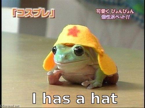 I has a hat. . EEC tash. truh.. Why yes, yes you do. I has a hat EEC tash truh Why yes you do