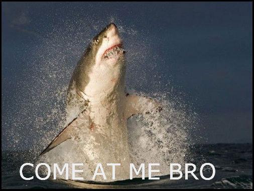 I'm a fuckin shark. . shark teeth