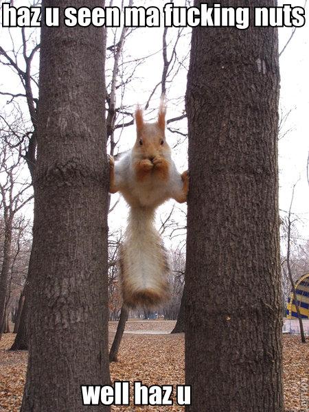 i like big nuts and i can not lie. i like big nuts and i can not lie.. karate squirrel! squirels Balls Nuts fuck ASS lol lulz funny Anal probes