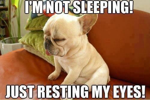 I'm just resting!. I'm just resting!. Lig- funny Dog Pug animal sleepy pet