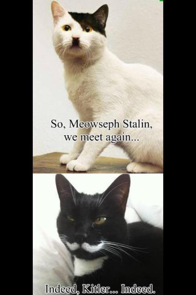 Indeed. . itm Stalin, I (llooll' Indeed itm Stalin I (llooll'