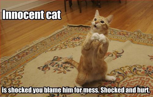 Innocent cat. thumb up for being innocent. can is mm hill] fimmers ttchtt tstart innocent cat Cute Kitten