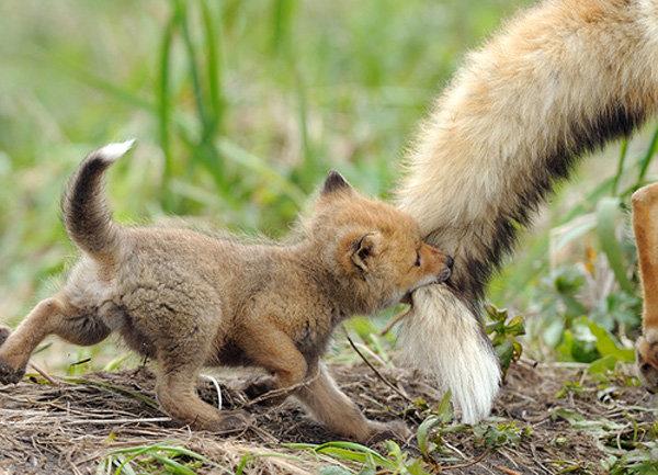 It would appear Firefox has a new add-on. . It would appear Firefox has a new add-on