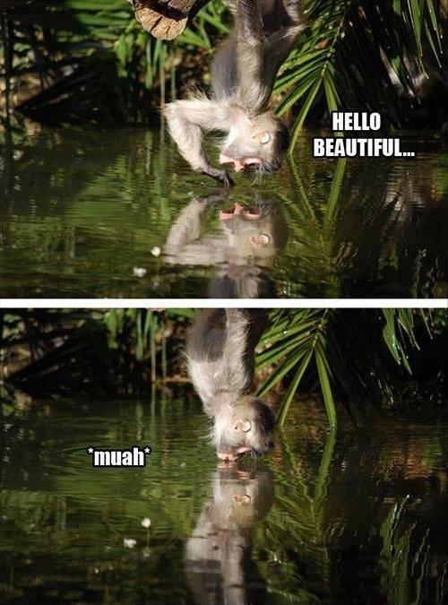 It's like you're my mirror. . monkey beauty