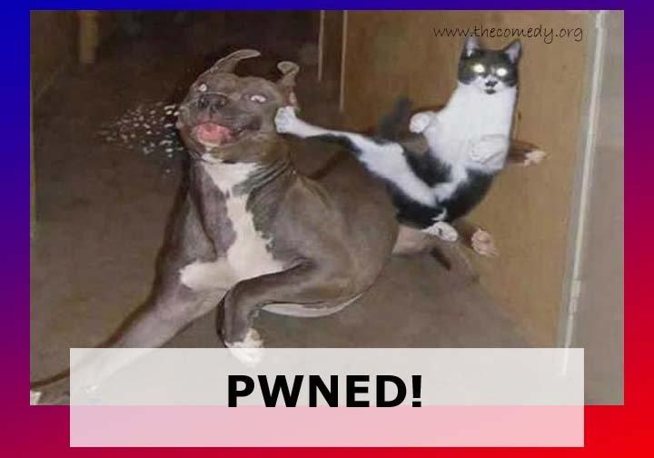 iz killz u.. what a pussy dog take a hit. lol... Hooray for repost. cat dog pwned fa