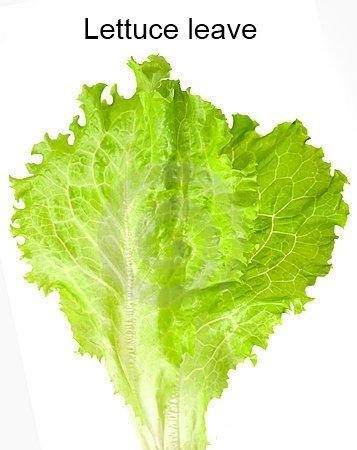 Lettuce. well.......???.. lettuce murder OP