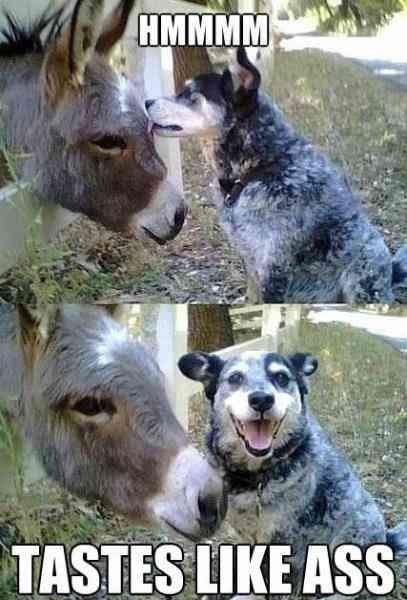 Like Ass. Ha!. Dog ASS