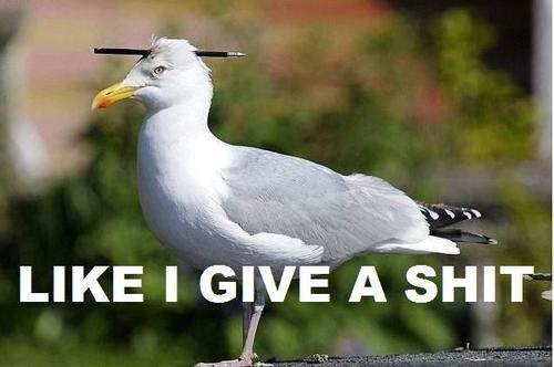 like i give a . . like i give a shit Badass Seagull