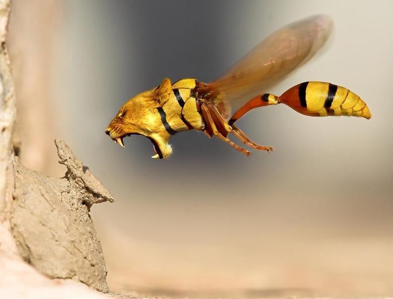 Lion Wasp, ATTACK!. Random hotties... www.classybro.com/2013/03/classy-bros-random-hotties-part-5/. Lion Wasp ATTACK! Random hotties www classybro com/2013/03/classy-bros-random-hotties-part-5/