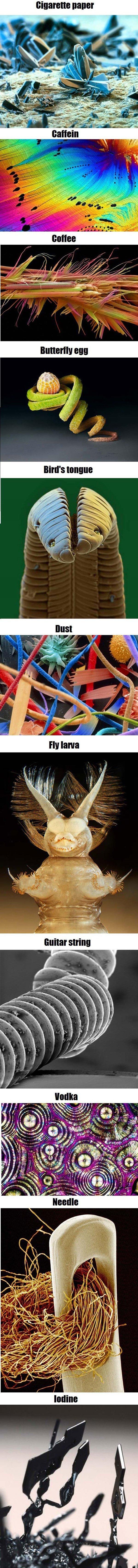 Macro-micro. .. Plot twist, frank was a fly larva the entire time. Macro-micro Plot twist frank was a fly larva the entire time