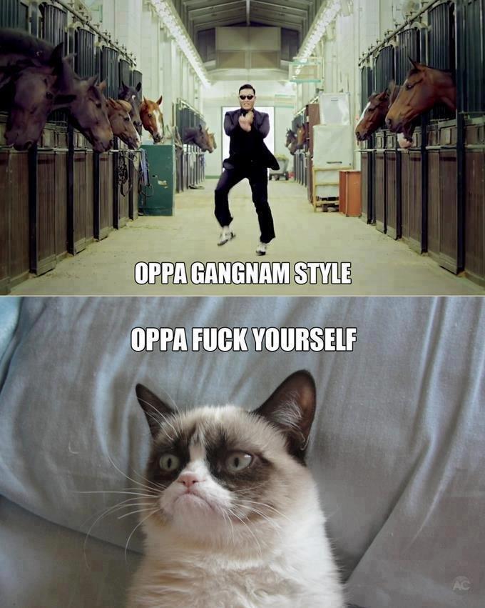 made me lol. and drop my sombrero. cat Grumpy