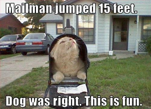 Mailmans a pussy.. lol. Mailmans a pussy lol