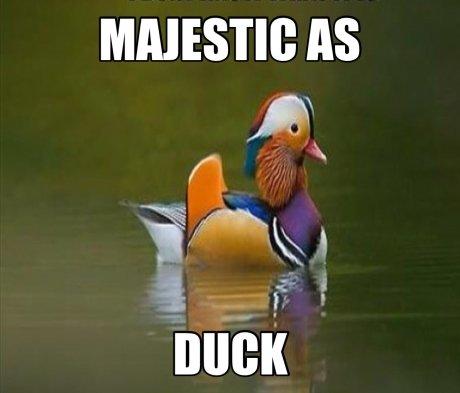 Majestic as duck. . Majestic as duck