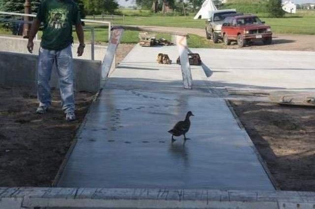 Making it funny. .. Quack quack Making it funny Quack quack