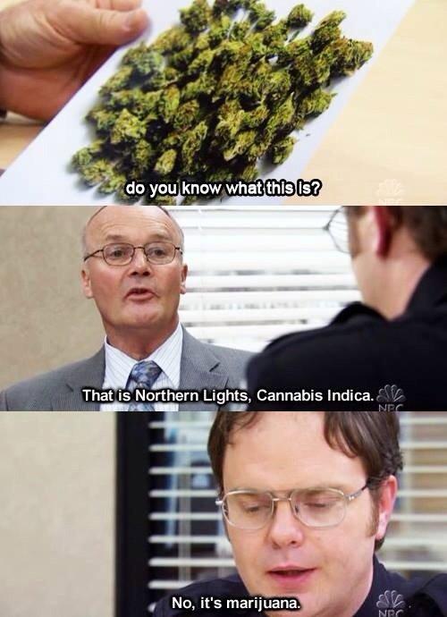Mary Jane. . NES That Cannabis rmtrju 420 blaze it