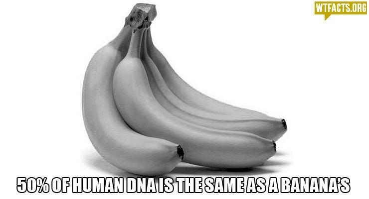 Me+ My girlfriend = 1 banana + 1 human!?. Source: wtfacts(dot)org/. lri) Cill HUMAN. asians are yellow bananas are yellow asians can read minds BANANAS CAN READ MINDS Me+ My girlfriend = 1 banana + human!? Source: wtfacts(dot)org/ lri) Cill HUMAN asians are yellow bananas can read minds BANANAS CAN READ MINDS