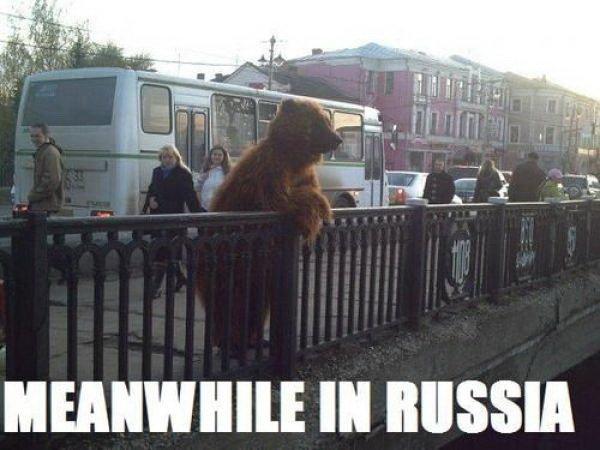 meanwhile in russia. meanwhile in russia.. IN SOVIET RUSSIA BEAR HAS POSTPARTUM DEPRESSION russia Bear lol lulz