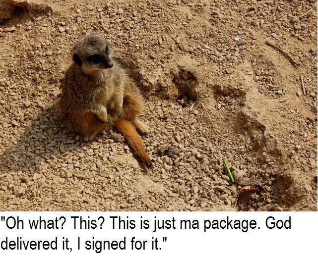 meerkat. family guy saying.. World keeps on spinnin'. Meerkat