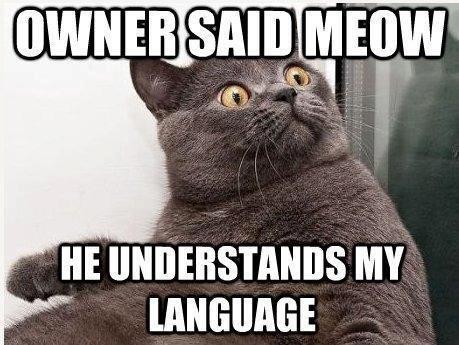 "Meow. . Ill"" Meow Ill"""
