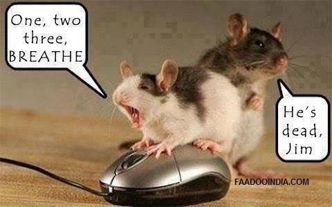 Mice. . Mice