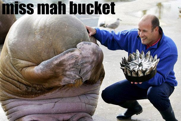 miss my bucket. .. wow no BP oil on them. I am amazed I miss my bucket