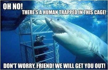 Misunderstood Shark. Misunderstood shark is misunderstood. r cap. Didn't know great white teeth made great lockpicks. misunderstood Shark