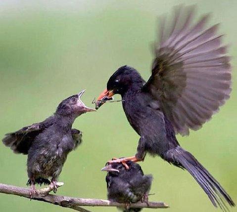 Moms favorite. . Bird favorite Mom