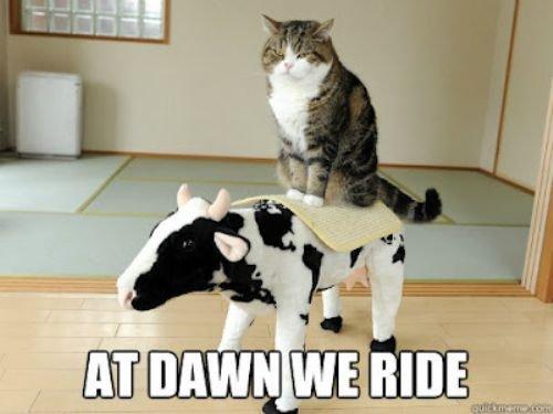 Moo. LOTR kitten... tags