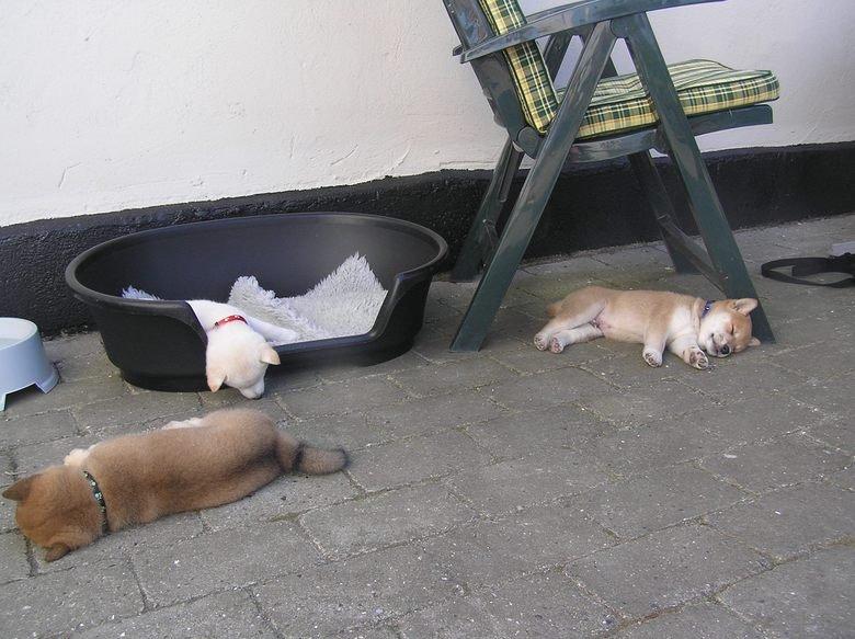 Much Tired, Very Asleep. . Much Tired Very Asleep