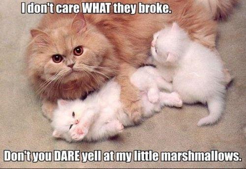 My Marshmallows. You heard me.. awww My Marshmallows You heard me awww