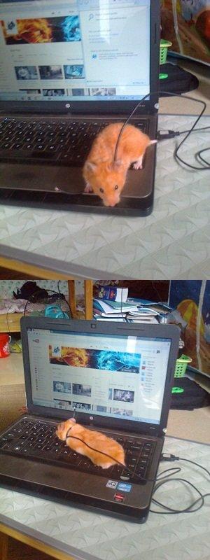 My new mouse. :)). My new mouse. My new mouse :))