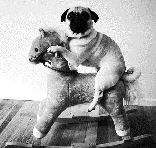 My people need me. .. Pug thread. My people need me Pug thread