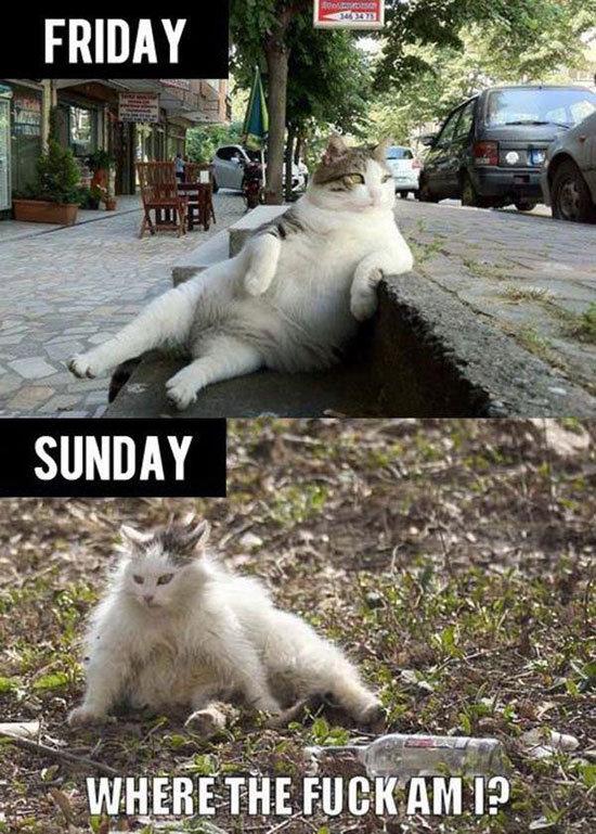 My weekends. . ren' hi