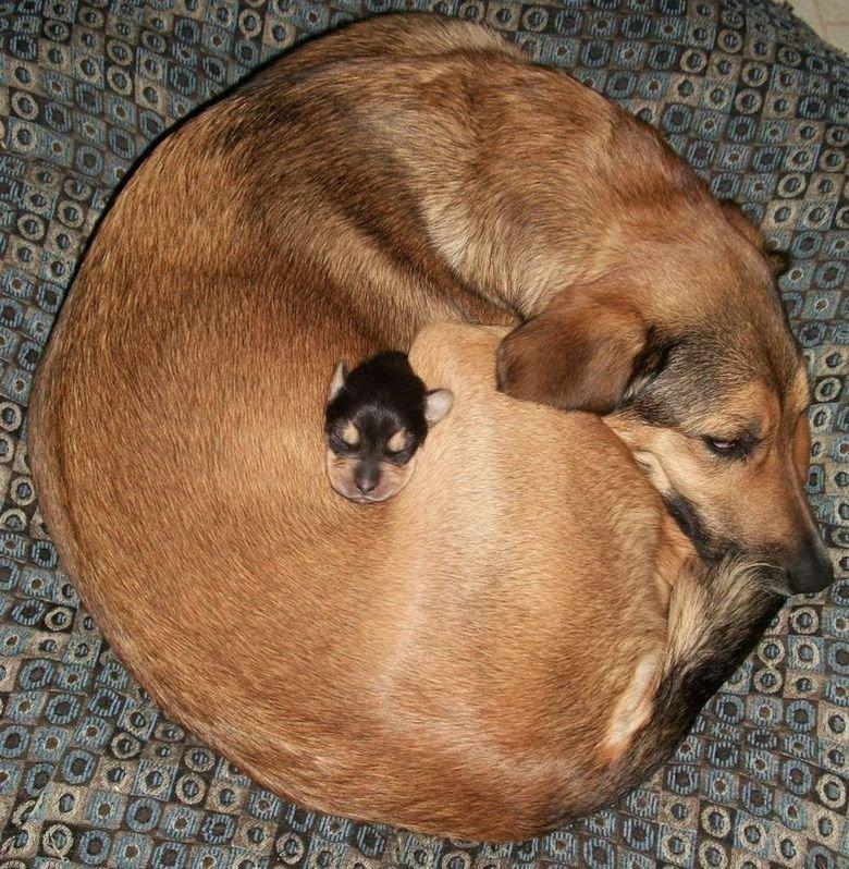 Perfect sleeping spot. Title says it all... Mfw Sleeping Spot