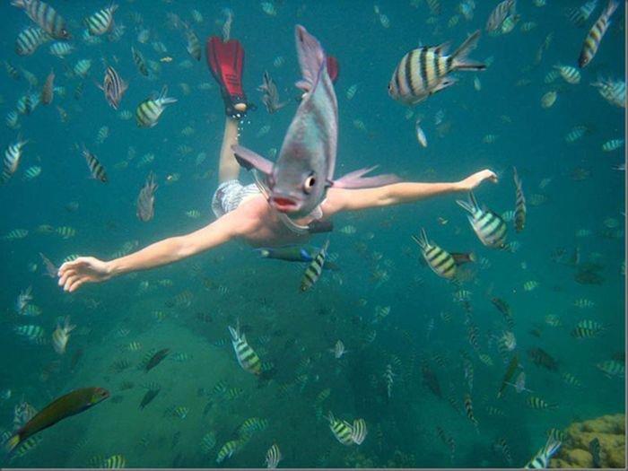 Photobomb. blub?. Fish photobomb