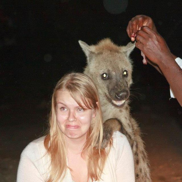 Photogenic hyena. . Photogenic hyena