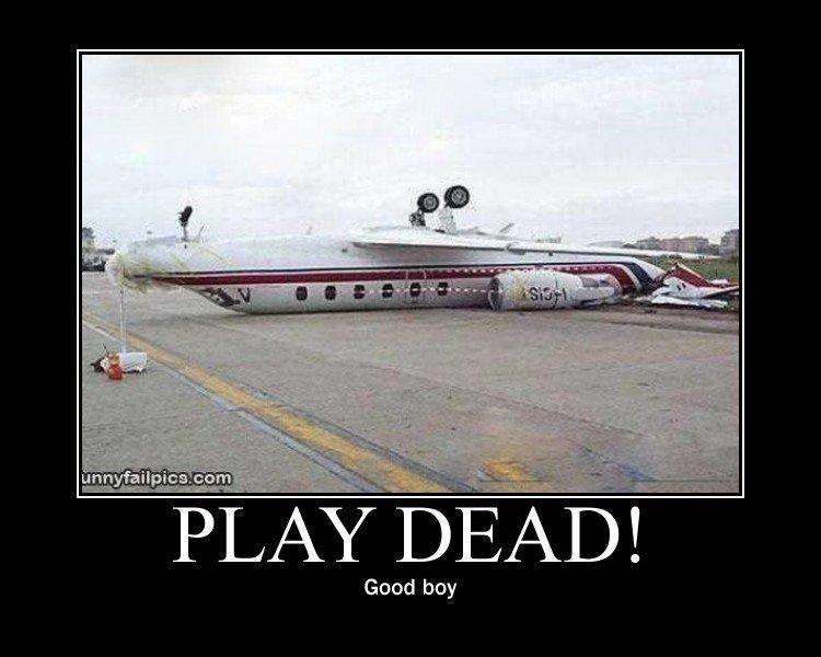Play dead!. . unna.: failtim: +. cnm Good boy plane upside down