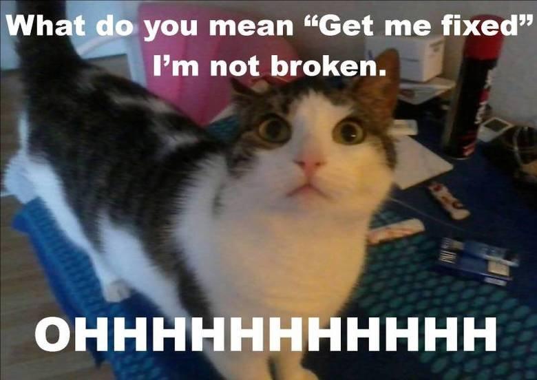 "Please don't do this to me !. My kitty :o). What_ d, o you mean ""Get me fixed"" Pm not broken. Please don't do this to me ! My kitty :o) What_ d o you mean ""Get fixed"" Pm not broken"