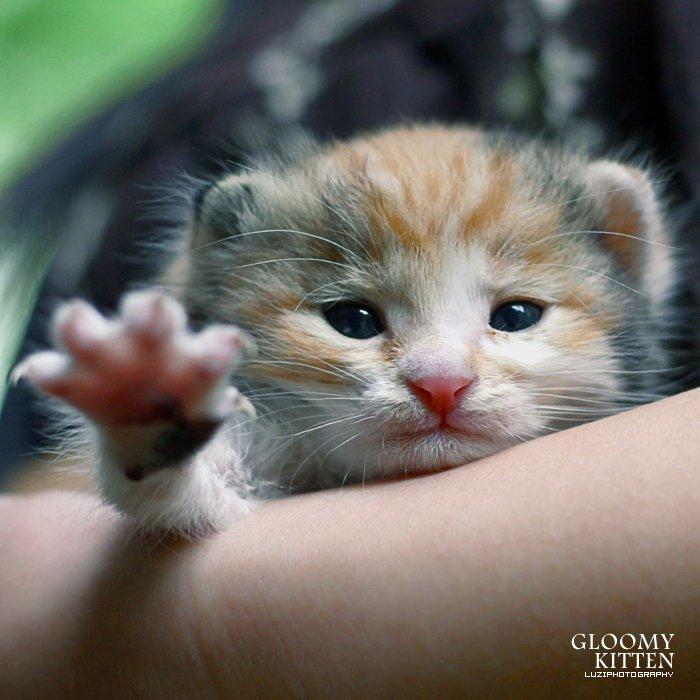 Proof cats are born evil. Heil Kitler!. Hitler Kitten heil Evil
