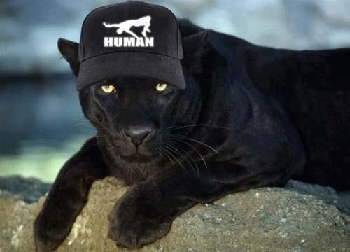 puma wears human :P. .. Thats a panther. . puma wears human :P Thats a panther