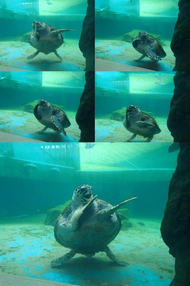 Teenage Mutant Dancing Turtle. Happiest turtle I have seen. happy Turtle dance tutlz rul