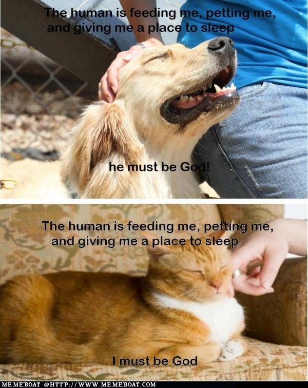 Thinking: Cat Vs Dog. .. OBEY! Thinking: Cat Vs Dog OBEY!