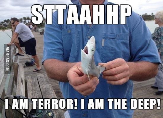 Tiny Shark. . Shark terror