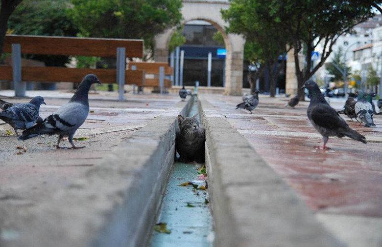 Trench warfare. . cat Pigeon