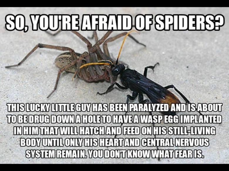 Yea... im still afraid.. .. i has a sad Yea im still afraid i has a sad