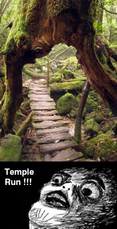 Yeaaahhhh. . Temple Run ll! Temple Run Tree