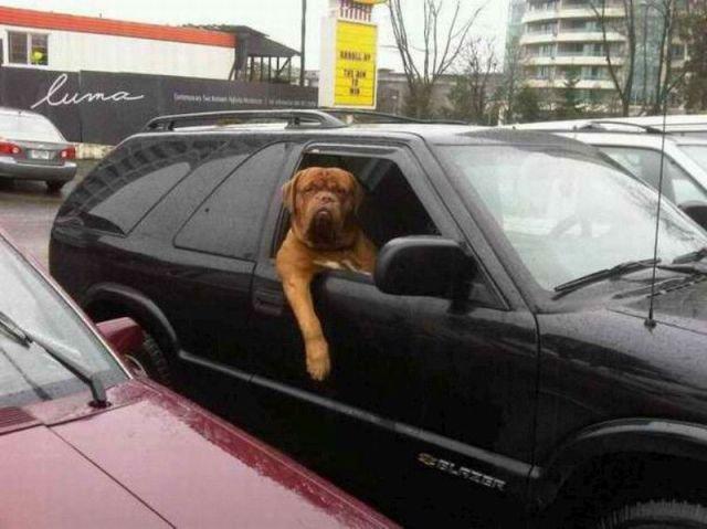 Yo Dawg. sup?. Yo Dawg sup?
